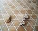 Tafelparkett, Intarsien Parkett 16, Hexagram (Kirsche, Ahorn, Wenge)